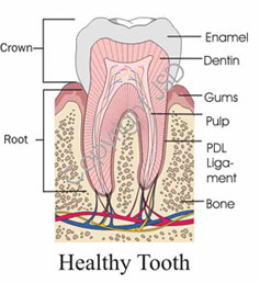 healthy-tooth